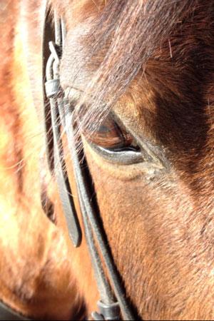 equitation-centre-equestre-var-paca-haras-la-colombiere