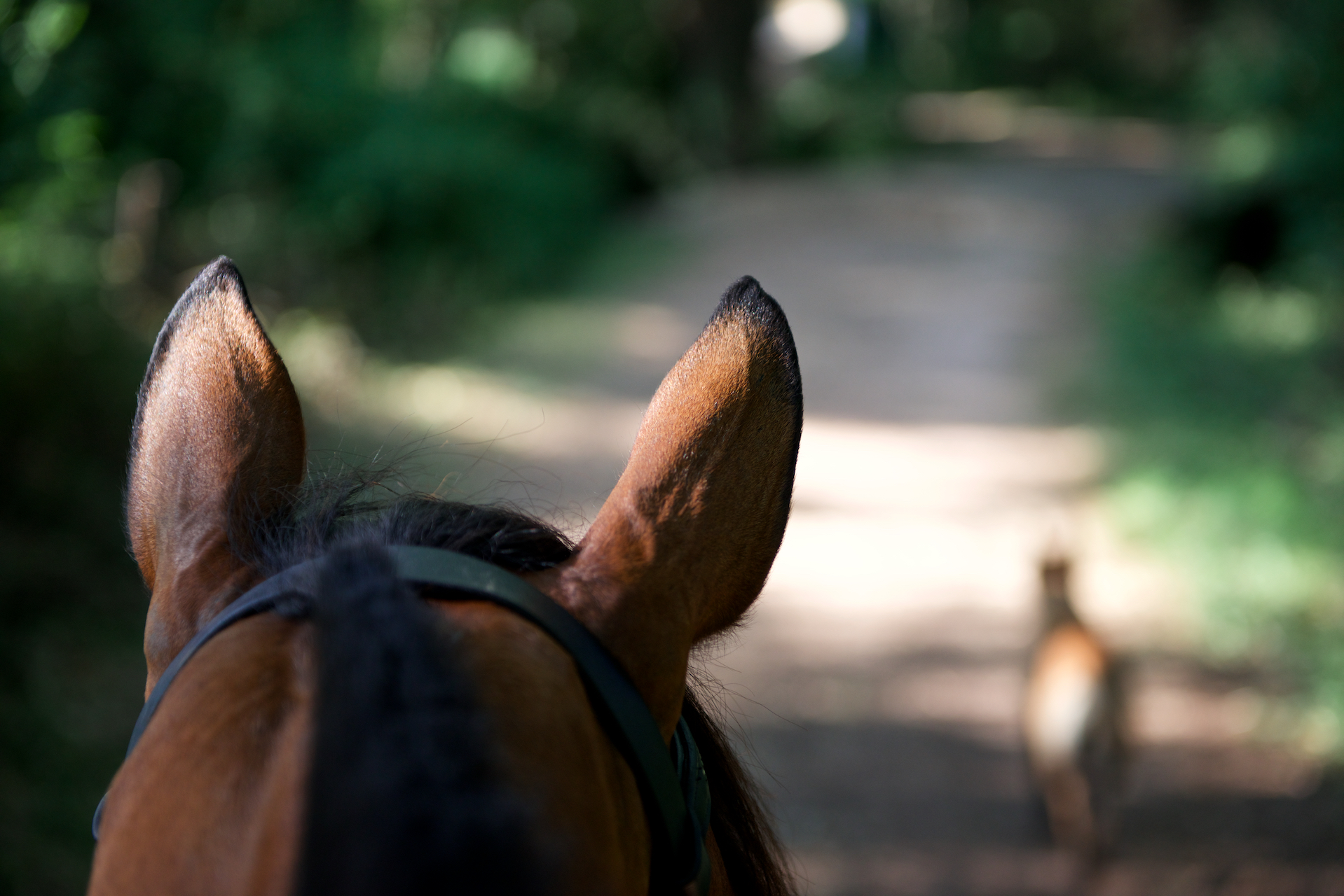 Haras La Colombiere - VDSE - Kissovo des Sables - Equitation Var